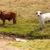 bruin · witte · koeien · gratis · kreek - stockfoto © sherjaca