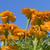 gyönyörű · panoráma · arany · kék · ég · fa · fa - stock fotó © sherjaca