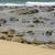 inundação · maré · panorama · australiano · oceano - foto stock © sherjaca