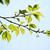 vers · groene · bladeren · kers · wolken · natuur · bomen - stockfoto © shihina