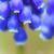 primer · plano · flores · flor · textura · verano · verde - foto stock © shihina