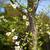 blanco · floración · árbol · Florida · Japón · naturaleza - foto stock © shihina