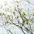 frescos · hojas · Florida · sol · naturaleza - foto stock © shihina
