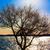 heldere · zonneschijn · boom · winter · hemel · zon - stockfoto © shihina