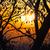siluetas · hojas · puesta · de · sol · brillo · sol · resumen - foto stock © shihina