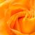 fényes · szirom · narancs · rózsa · természet · kert - stock fotó © shihina