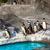pingvin · állatkert · Barcelona · kő · Európa · fotózás - stock fotó © shihina