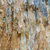 colored paper bark abstract stock photo © silkenphotography