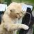gato · marrom · serpente · recheado · mostrar · doméstico - foto stock © silkenphotography