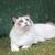 kedi · yavrusu · izlerken · gökyüzü · mühürlemek · yukarı - stok fotoğraf © silkenphotography
