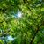 verde · brilhante · sol · árvore · queensland - foto stock © silkenphotography
