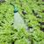 verde · água · doce · gotas · natureza - foto stock © simazoran