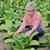 фермер · табак · области · завода · зеленый · промышленности - Сток-фото © simazoran