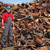 recycling industry worker standing at heap of old metal stock photo © simazoran