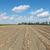 cebola · plantação · vegetal · jardim · comida · natureza - foto stock © simazoran