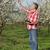 фермер · слива · деревья - Сток-фото © simazoran