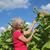 gazda · dohány · mező · női · virágzó · növény - stock fotó © simazoran