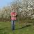 belle · floraison · verger · fraîches · vert · arbuste - photo stock © simazoran