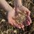 landbouw · vrouwelijke · hand · tarwe - stockfoto © simazoran