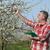 agriculteur · floraison · prune · verger · floraison · arbres - photo stock © simazoran