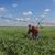 fazenda · campo · irrigação · moderno · água · recentemente - foto stock © simazoran