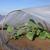 campo · agricola · materiale · serra · bugie · business - foto d'archivio © simazoran
