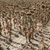 気候変動 · 干ばつ · ヒマワリ · フィールド · 自然 - ストックフォト © simazoran