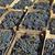 merlot grape for wine making stock photo © simazoran