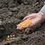 vetés · kéz · föld · mutat · növekedés · mezőgazdaság - stock fotó © simazoran
