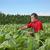 фермер · табак · области · завода · лист - Сток-фото © simazoran