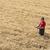 mezőgazdasági · jelenet · gazda · búzamező · aratás · idő - stock fotó © simazoran