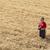 mezőgazdasági · jelenet · gazda · búzamező · búza · növény - stock fotó © simazoran