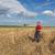 пшеницы · урожай · время · красивой · закат · живописный - Сток-фото © simazoran