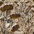 changement · climatique · sécheresse · tournesol · domaine · naturelles · catastrophe - photo stock © simazoran