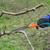 agriculture · arbre · verger · pommier · main - photo stock © simazoran