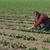 zaaien · tijd · bodem · voorjaar · seizoen · veld - stockfoto © simazoran