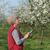 landbouwer · pruim · boomgaard · bomen - stockfoto © simazoran