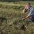 jeans · trevo · campo · planta · indicação - foto stock © simazoran