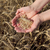 agricultural concept wheat in hands and field stock photo © simazoran