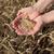 小麦 · 収穫 · 手 · 農家 · 品質 - ストックフォト © simazoran