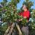 sárgabarack · gyümölcs · egész · fél · levél · izolált - stock fotó © simazoran