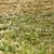 ervas · enforcamento · erva · folha · flor · aço · inoxidável - foto stock © simazoran