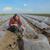 watermelon or melon planting in field stock photo © simazoran