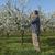 agriculteur · floraison · prune · verger · floraison - photo stock © simazoran