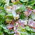 caesar · salade · geïsoleerd · witte · salade · kom - stockfoto © sirylok