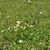 ヒナギク · 緑の草 · 花 · 春 · 草 - ストックフォト © sirylok