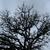 oak tree branches stock photo © sirylok