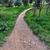 パス · 緑の草 · 青空 · 空 · 草 · 市 - ストックフォト © sirylok