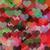 colorful hearts abstract illustration stock photo © sirylok