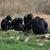 şempanze · çim · kadın · oturma · bakıyor · kamera - stok fotoğraf © sirylok